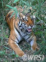 WPSI - Wildlife Protection Society of India - About Us